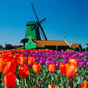 holland_in_blumen