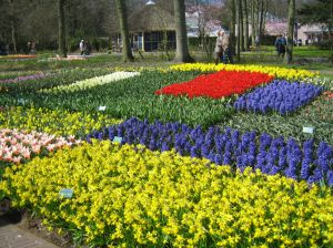map_of_flowers_2